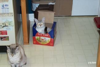 Zeus in Box