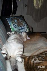 Zeus the Cat - My Scans